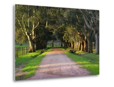 Tree Lined Country Road at Sunset, Montevideo, Uruguay-Per Karlsson-Metal Print