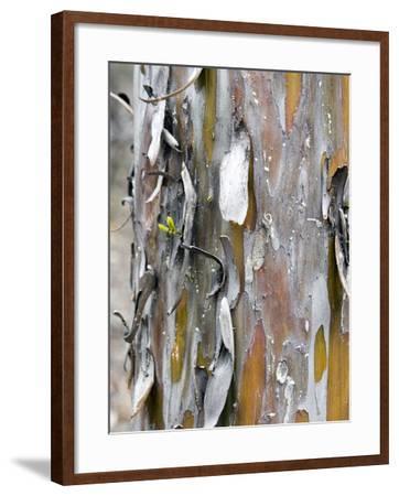 Texture and Patterns in Tree Near Sedona, Arizona, USA-Diane Johnson-Framed Photographic Print