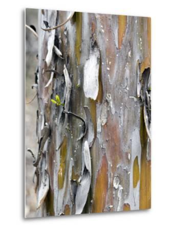 Texture and Patterns in Tree Near Sedona, Arizona, USA-Diane Johnson-Metal Print