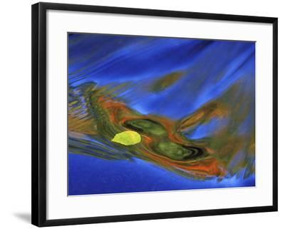 Birch Leaf in River Current with Autumn and Sky Reflections, Upper Peninsula, Michigan, USA-Mark Carlson-Framed Photographic Print