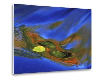 Birch Leaf in River Current with Autumn and Sky Reflections, Upper Peninsula, Michigan, USA-Mark Carlson-Metal Print