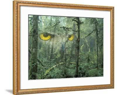 Montage, Owl, Forest, Oregon, USA-Nancy Rotenberg-Framed Photographic Print