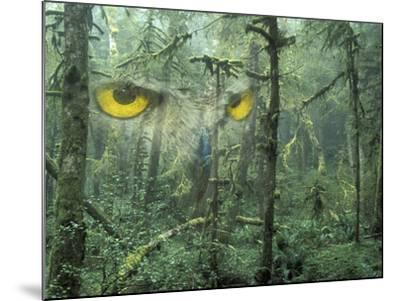 Montage, Owl, Forest, Oregon, USA-Nancy Rotenberg-Mounted Photographic Print