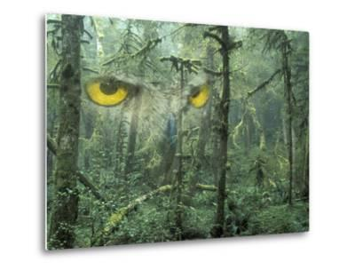 Montage, Owl, Forest, Oregon, USA-Nancy Rotenberg-Metal Print