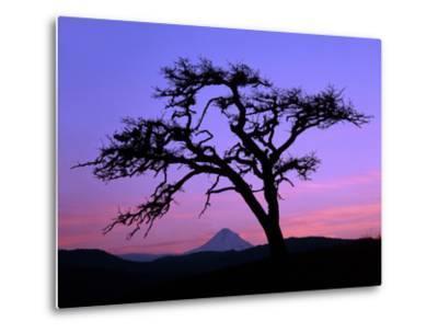 Windswept Pine Tree Framing Mount Hood at Sunset, Columbia River Gorge National Scenic Area, Oregon-Steve Terrill-Metal Print