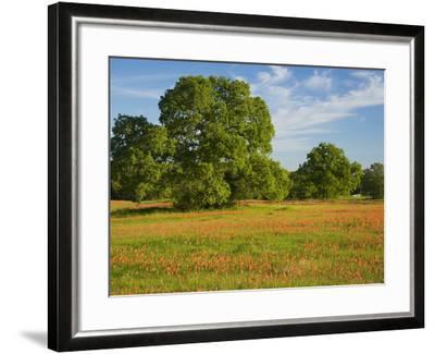 Paint Brush in Fields Near Gay Hill, Texas, USA-Darrell Gulin-Framed Photographic Print