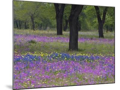 Field of Texas Blue Bonnets, Phlox and Oak Trees, Devine, Texas, USA-Darrell Gulin-Mounted Photographic Print