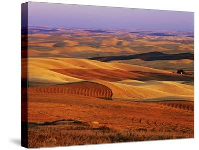 View of Colorful Palouse Farm Country at Twilight, Washington, USA-Dennis Flaherty-Stretched Canvas Print
