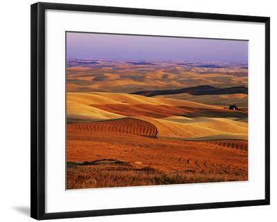 View of Colorful Palouse Farm Country at Twilight, Washington, USA-Dennis Flaherty-Framed Photographic Print