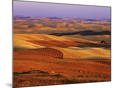 View of Colorful Palouse Farm Country at Twilight, Washington, USA-Dennis Flaherty-Mounted Photographic Print