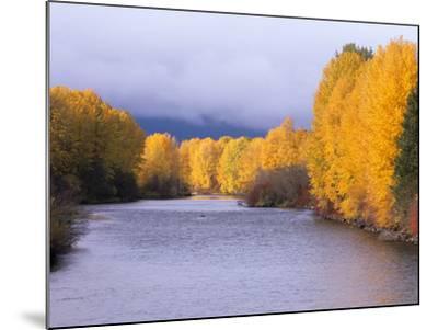 Yakima River and Trees in Autumn, Near Cle Elum, Kittitas County, Washington, USA-Jamie & Judy Wild-Mounted Photographic Print