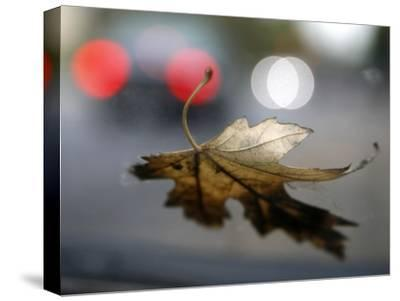 Leaf Reflections-Nicole Katano-Stretched Canvas Print