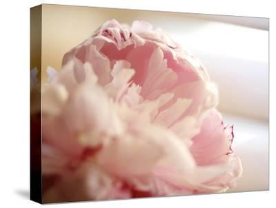 Sweet Flower II-Nicole Katano-Stretched Canvas Print