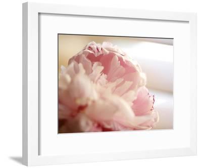 Sweet Flower II-Nicole Katano-Framed Photo
