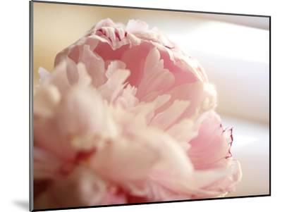 Sweet Flower II-Nicole Katano-Mounted Photo
