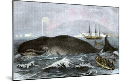 Longboat Crew Attacking a Whale with Hand Harpoons in the Arctic, c.1800--Mounted Giclee Print