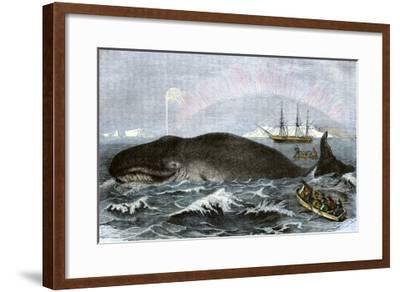 Longboat Crew Attacking a Whale with Hand Harpoons in the Arctic, c.1800--Framed Giclee Print