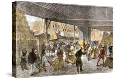 Unloading Tea-Ships in the British East India Company's Docks, London, c.1860--Stretched Canvas Print
