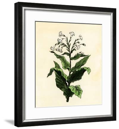 Tobacco Plant--Framed Giclee Print