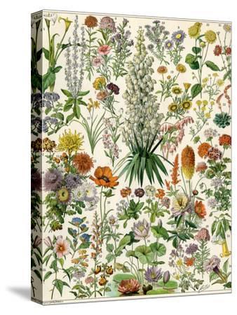 Perennial Garden Flowers, Aster, Daisy, Bleeding Heart, Geranium, Primrose, Phlox--Stretched Canvas Print