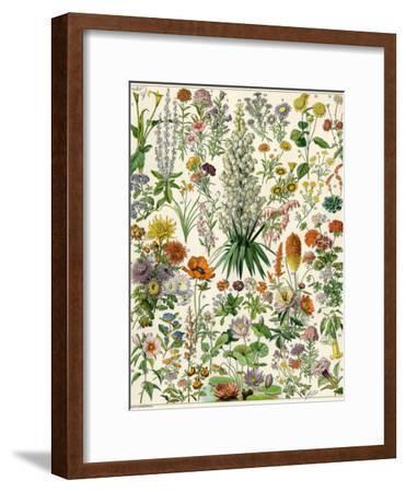 Perennial Garden Flowers, Aster, Daisy, Bleeding Heart, Geranium, Primrose, Phlox--Framed Giclee Print