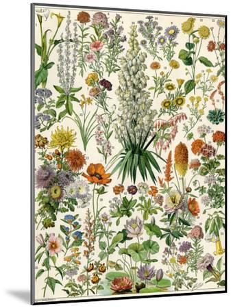Perennial Garden Flowers, Aster, Daisy, Bleeding Heart, Geranium, Primrose, Phlox--Mounted Giclee Print