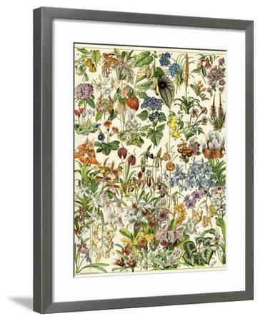 Tropical and Exotic Flowers, Including Orchid, Anthurium, Gloxinia, Trillium--Framed Giclee Print