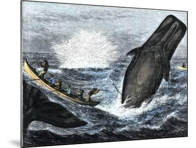 Whale Struck by a Harpoon While Breaching, c.1800--Mounted Giclee Print