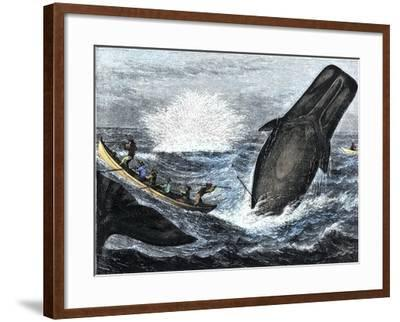 Whale Struck by a Harpoon While Breaching, c.1800--Framed Giclee Print