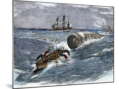 Angry Whale Chasing a Harpoon Boat--Mounted Giclee Print