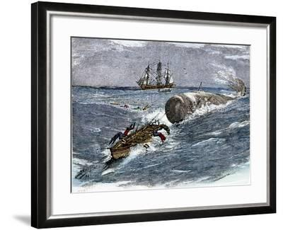 Angry Whale Chasing a Harpoon Boat--Framed Giclee Print