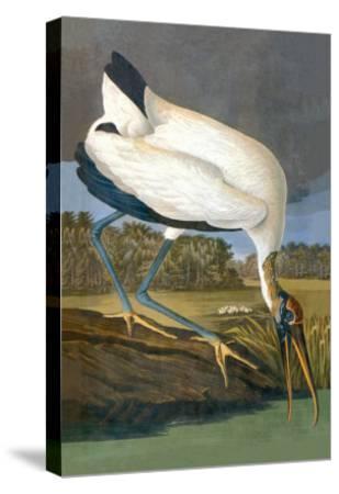 Wood Stork-John James Audubon-Stretched Canvas Print