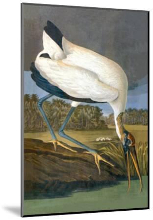 Wood Stork-John James Audubon-Mounted Art Print