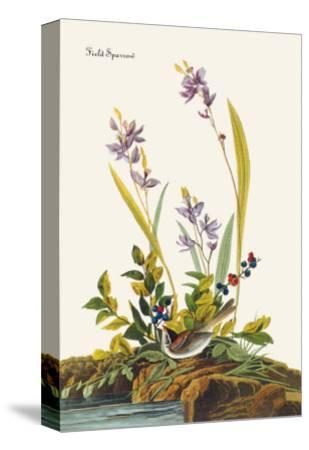 Field Sparrow-John James Audubon-Stretched Canvas Print