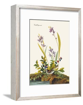 Field Sparrow-John James Audubon-Framed Art Print