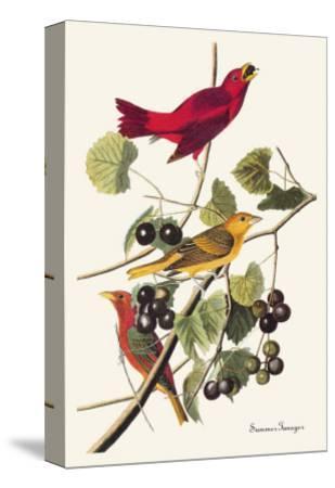 Summer Tanager-John James Audubon-Stretched Canvas Print