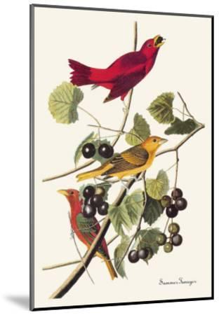Summer Tanager-John James Audubon-Mounted Art Print