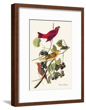 Summer Tanager-John James Audubon-Framed Art Print