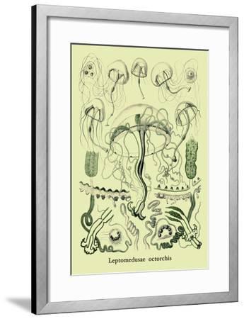 Jellyfish: Leptomedusae Octorchis-Ernst Haeckel-Framed Art Print