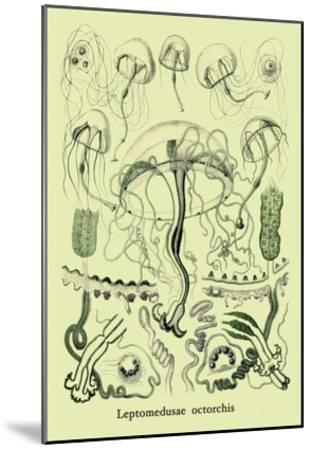 Jellyfish: Leptomedusae Octorchis-Ernst Haeckel-Mounted Art Print