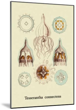 Jellyfish: Tesserantha Connectens-Ernst Haeckel-Mounted Art Print