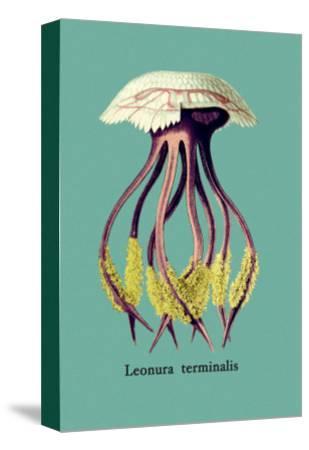 Jellyfish: Leonura Terminalis-Ernst Haeckel-Stretched Canvas Print