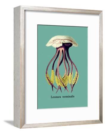 Jellyfish: Leonura Terminalis-Ernst Haeckel-Framed Art Print
