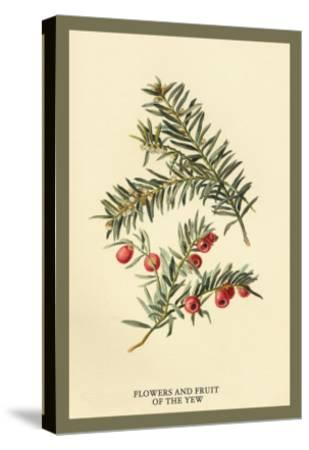 Flowers and Fruit of the Yew-W^h^j^ Boot-Stretched Canvas Print