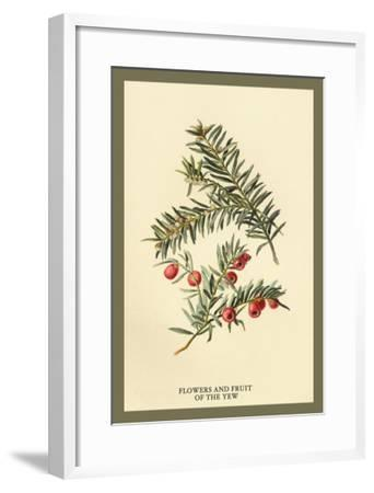 Flowers and Fruit of the Yew-W^h^j^ Boot-Framed Art Print