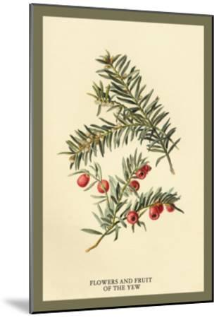 Flowers and Fruit of the Yew-W^h^j^ Boot-Mounted Art Print