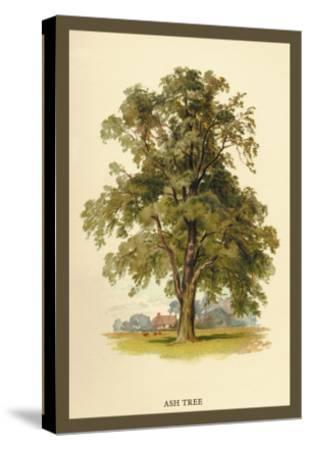 Ash Tree-W^h^j^ Boot-Stretched Canvas Print