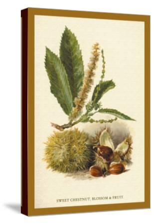 Sweet Chestnut, Blossom and Fruit-W^h^j^ Boot-Stretched Canvas Print