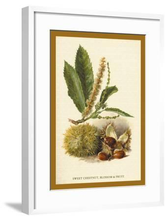 Sweet Chestnut, Blossom and Fruit-W^h^j^ Boot-Framed Art Print