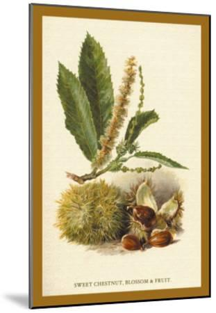 Sweet Chestnut, Blossom and Fruit-W^h^j^ Boot-Mounted Art Print